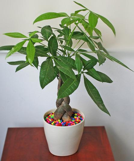 Tài lộc đua nhau ập tới khi trồng những cây này trong nhà